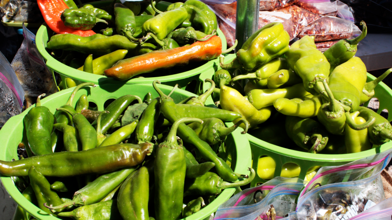 Green chilies are just one variety of peppers that are just now beginning to reach their peak season.