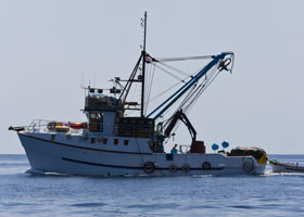 ARTICLES---fishing