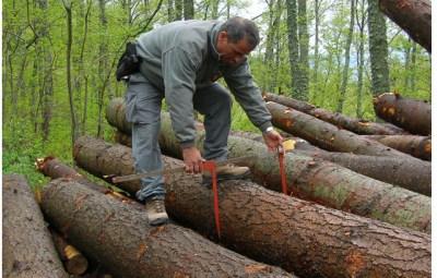 misurazione-del-legname