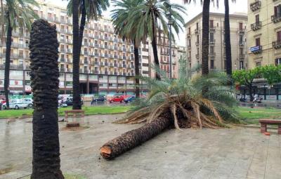 Un albero caduto per il temporale che ha colpito Palermo, 10 Agosto 2015. ANSA/ FRANCO LANNINO