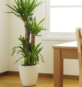Indoor Plants 07