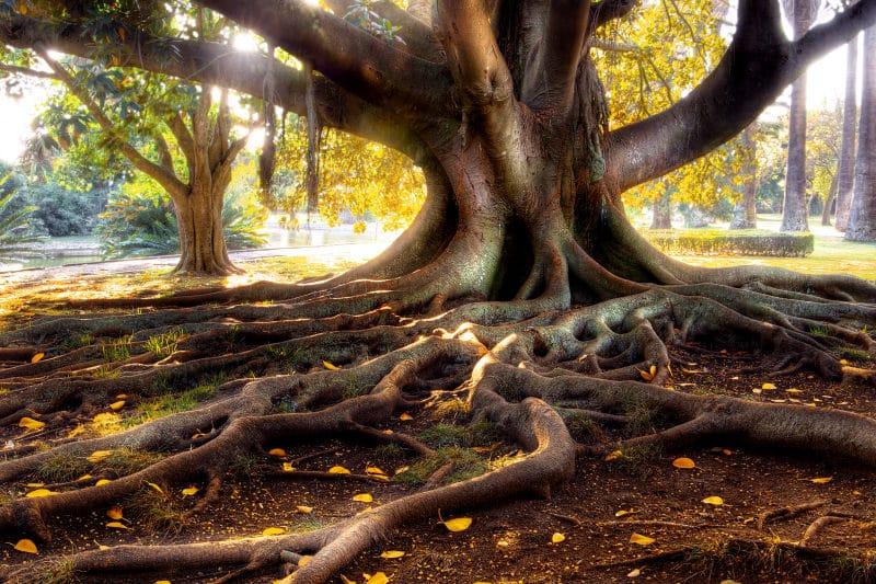 Tree Roots sunshine