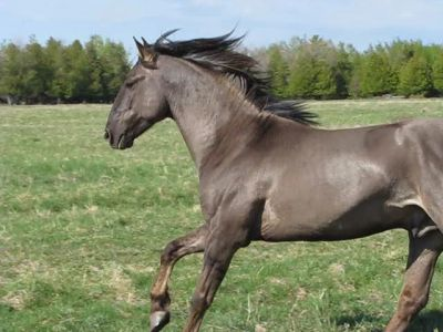 Top 9 Horses With The Most Unusual And Beautiful Colors You Have Ever Seen