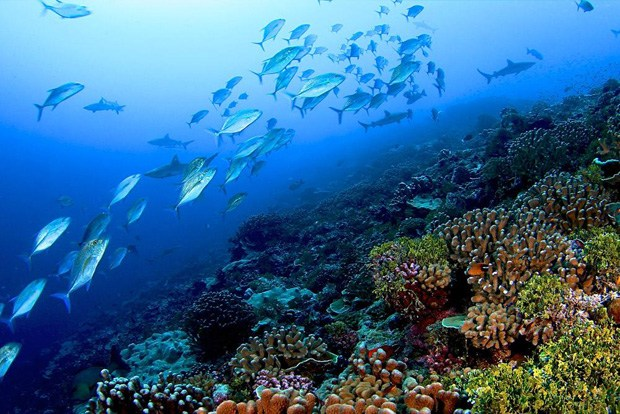 Microbial Takeover on Coral Reefs?