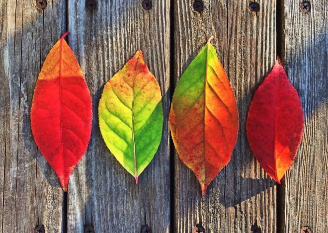 Feuilles d'automnes de différentes couleurs