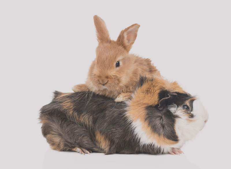 Large Of Best Small Pets