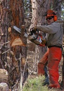 220px-Chainsaw_cutting_tree