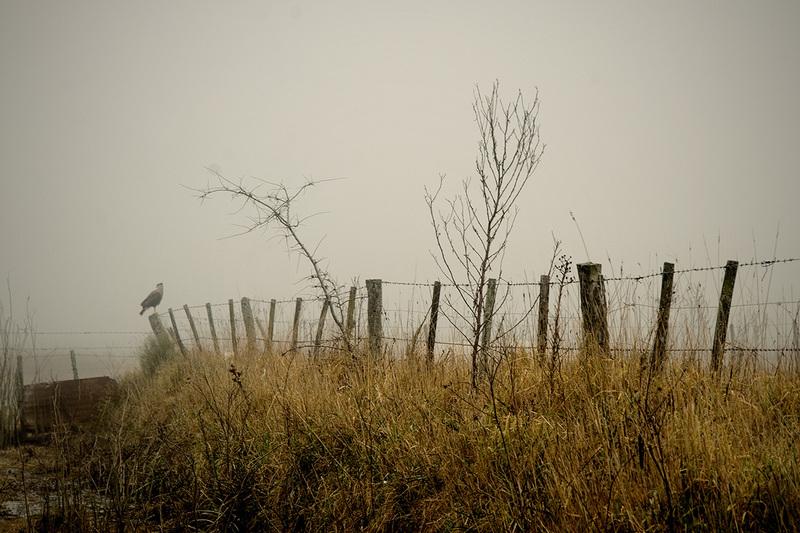 Rapaz en la niebla (Oscar Cejas)