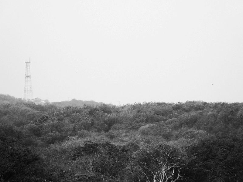 Selva allanada (Alberto García Cardona)