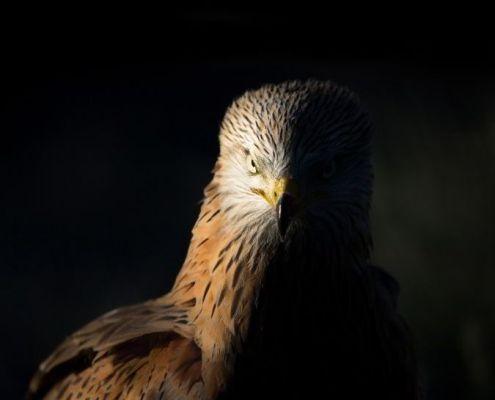 I Concurso fotográfico Oeste Ibérico Norte Photo Contest