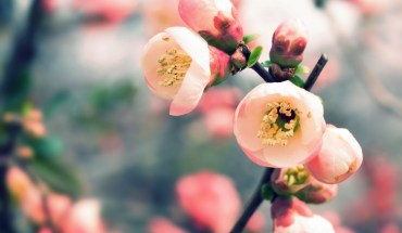 welcome_spring-wallpaper-1440x900