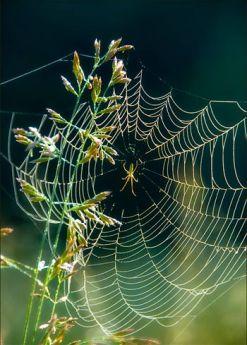 webs0343.jpg