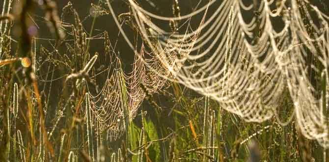 spider webs summer pasture