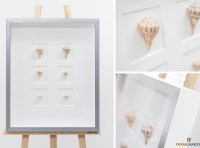 Shells-shadowbox-windows-watergilded-moulding-frame-framemakers