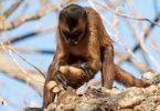 capa_macacos