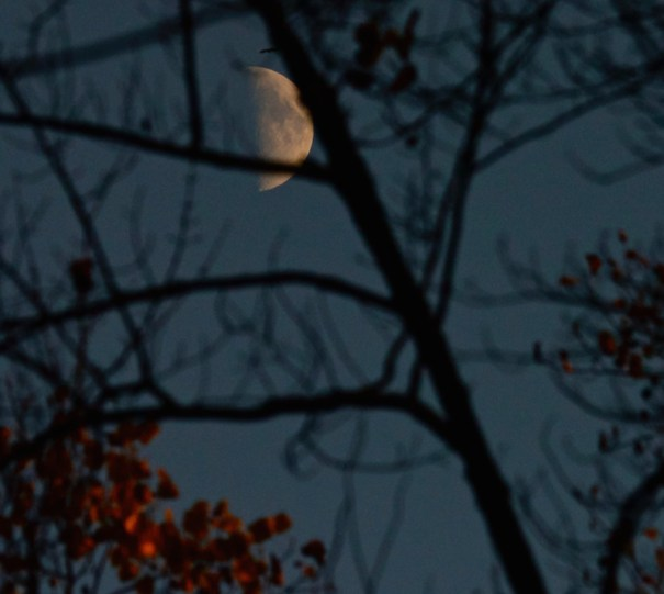 Pennsylvania Moon