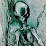 Injured Grey alien found and filmed
