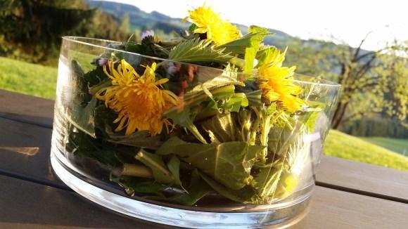 loewenzahn-brennessel-gaensebluemchen