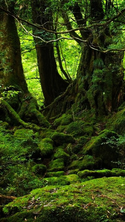Green Forest Wallpaper - Free iPhone Wallpapers