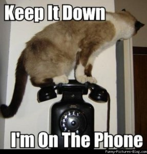 cat on a phone
