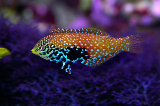 Salt Water Fish on Free Stock Photo 1348 Saltwater Tropical Fish 0802