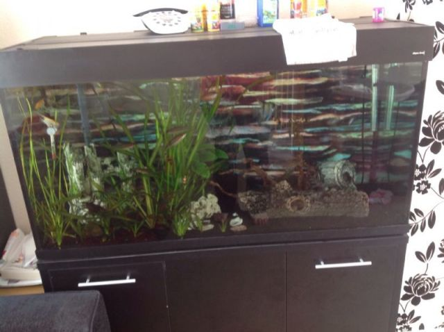 Maintenance free fish tank yearly low maintenance for Low maintenance fish tank