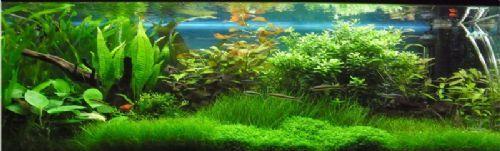 PKV Aquatic   Aquarium Cleaning and Maintenance Company in Ely (UK)