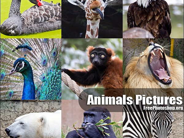Free Animal Pictures