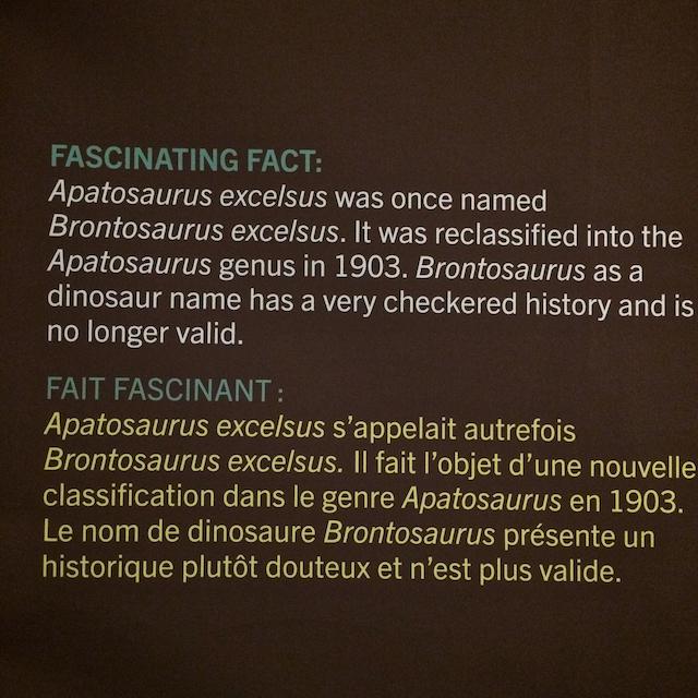 Apatosaurus excelsus