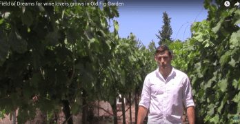 'Field of Dreams' for wine lovers grows in Old Fig Garden