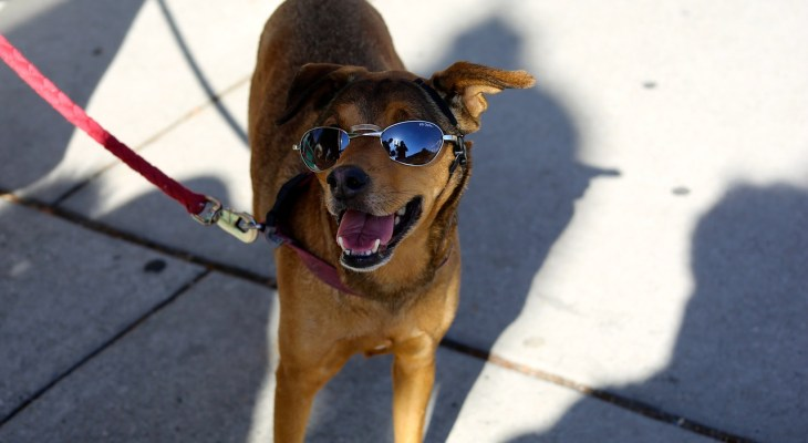 5 Ways to Keep Dogs Safe & Cool During a Heat Wave