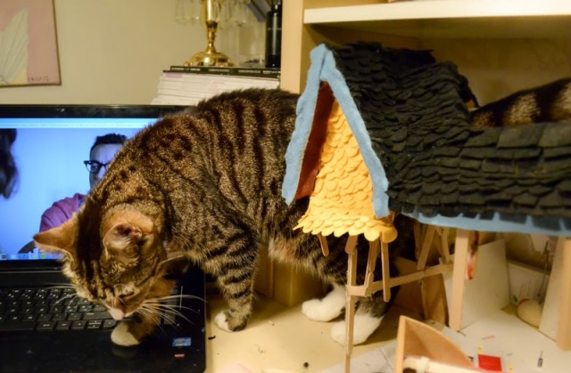 cat model up house