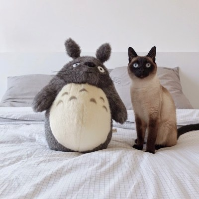 siamese cat and totoro byaudreyjeanne