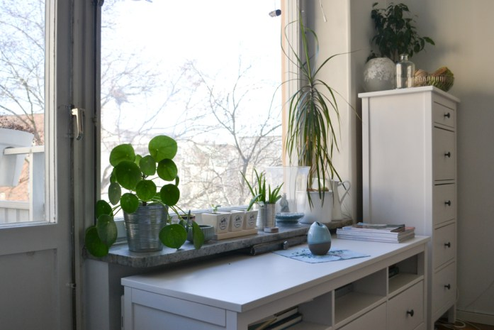 windowsil with plants