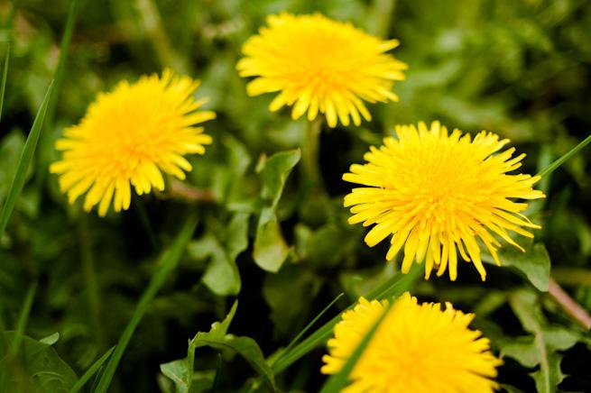 Spring abundance!