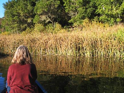 canoe and heron on lafayette reservoir