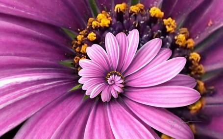 purple_droste-1920x1200_zpsd19a9edc