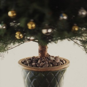 Live, Potted Christmas Tree - Clinton Hussey