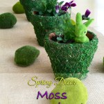 Spring Moss Covered Pots