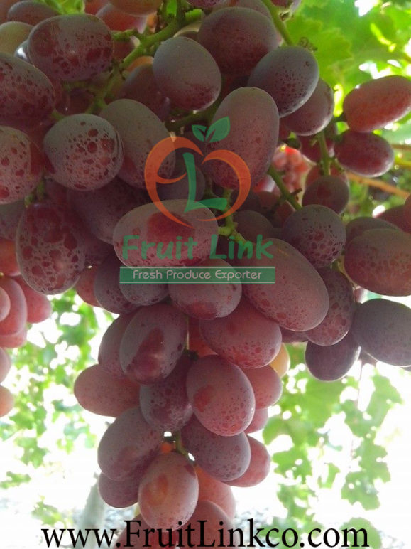 Crimson grapes by Fruit Link