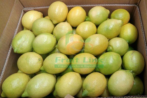 Egyptian Fresh Lemons in cartoon by Fruit link ready for export