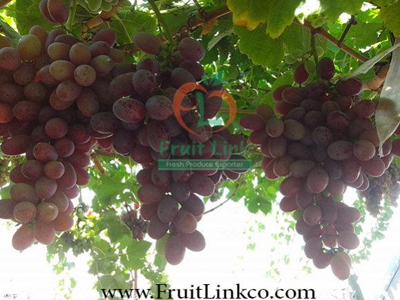 Crimson grapes by Fruit Link