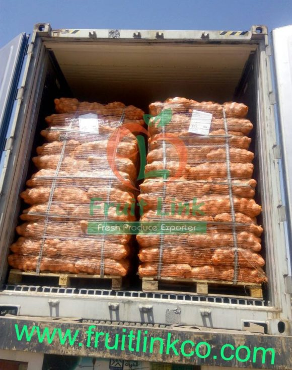 Golden Onions Ready for shipping by Fruit Link