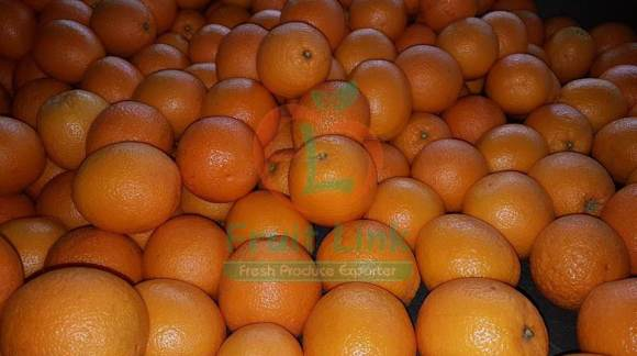 Valencia Oranges for export by Fruit Link