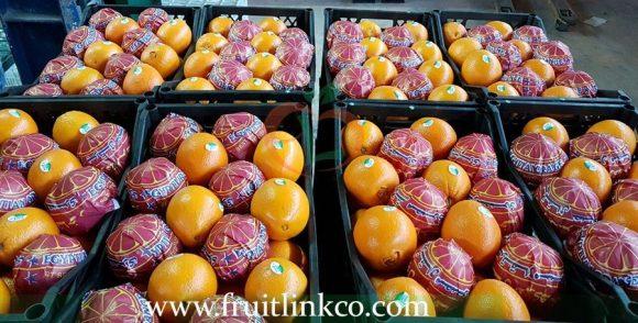 Navel Oranges Fresh premium quality | Fruit Link