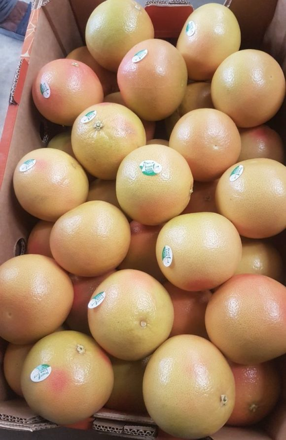 Egyptian grapefruit ready for export by fruit link