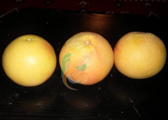 Import GrapeFruit from Egypt -the best quality- | Fruit Link