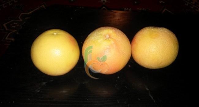 Grape fruit (3)