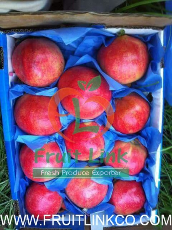 Egyptian Pomegranates early 116 Pack by Fruit Link (9)