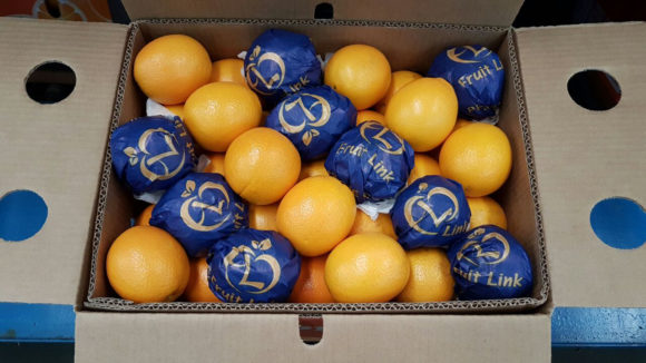 Navel Oranges in carton pack ready for export by fruit link